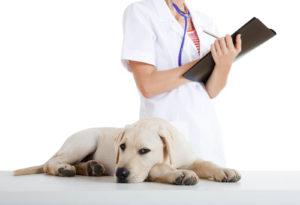 dog waste service Longmont