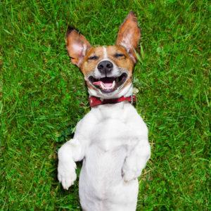 dog poop service Longmont